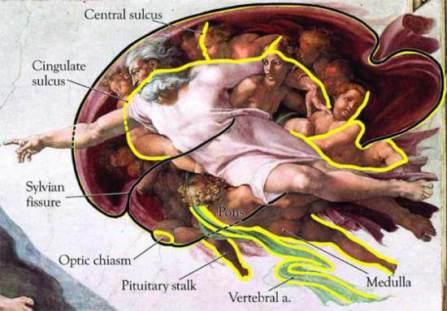 sistine-chapel-brain-100720-02-img_assist_custom